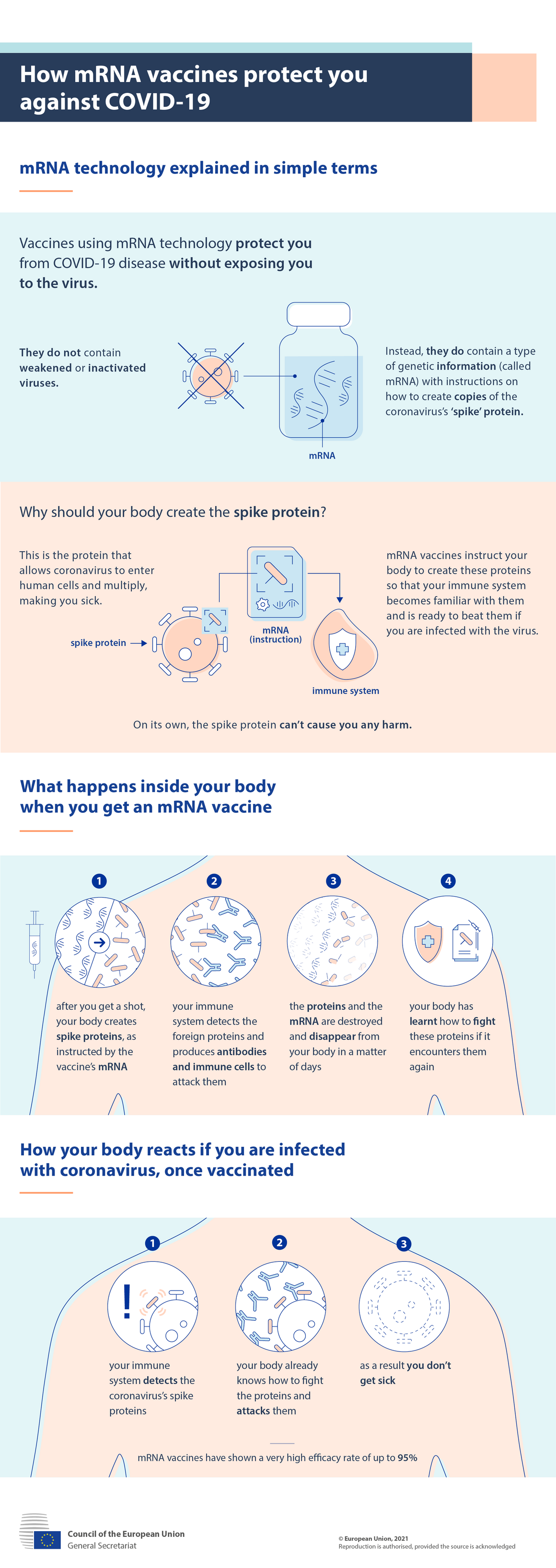 Infographic: How mRNA vaccines protect you against COVID-19