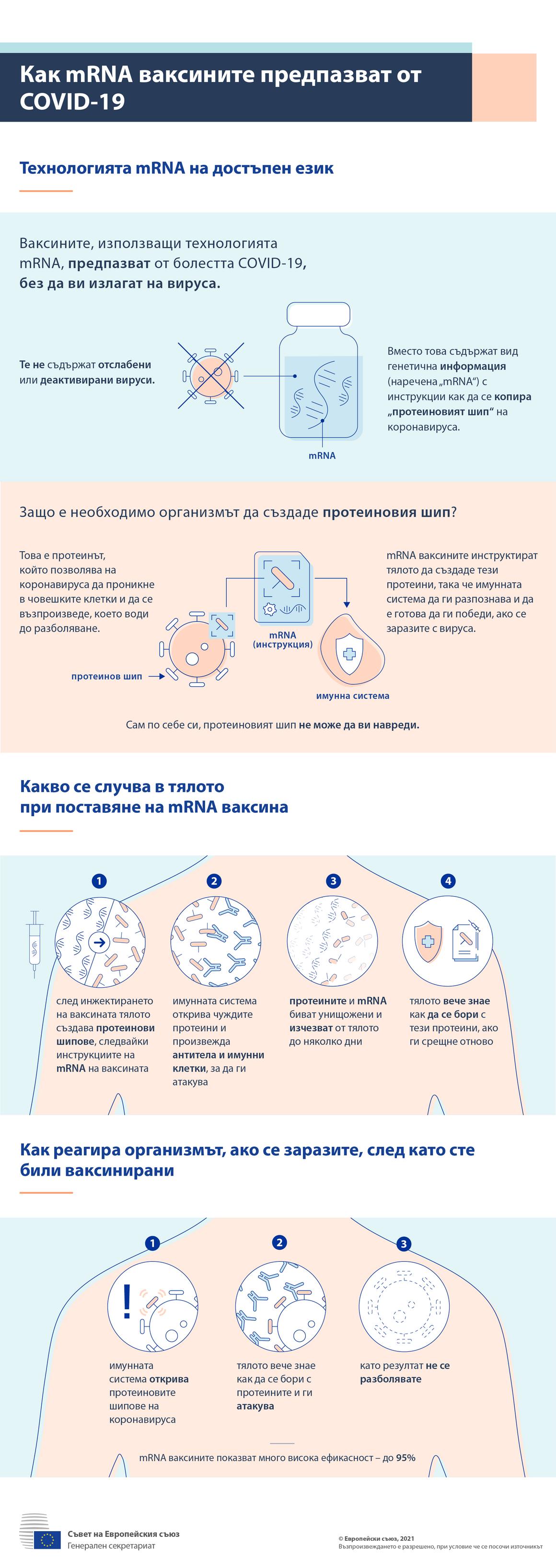 Инфографика: Как иРНК ваксините предпазват от COVID-19