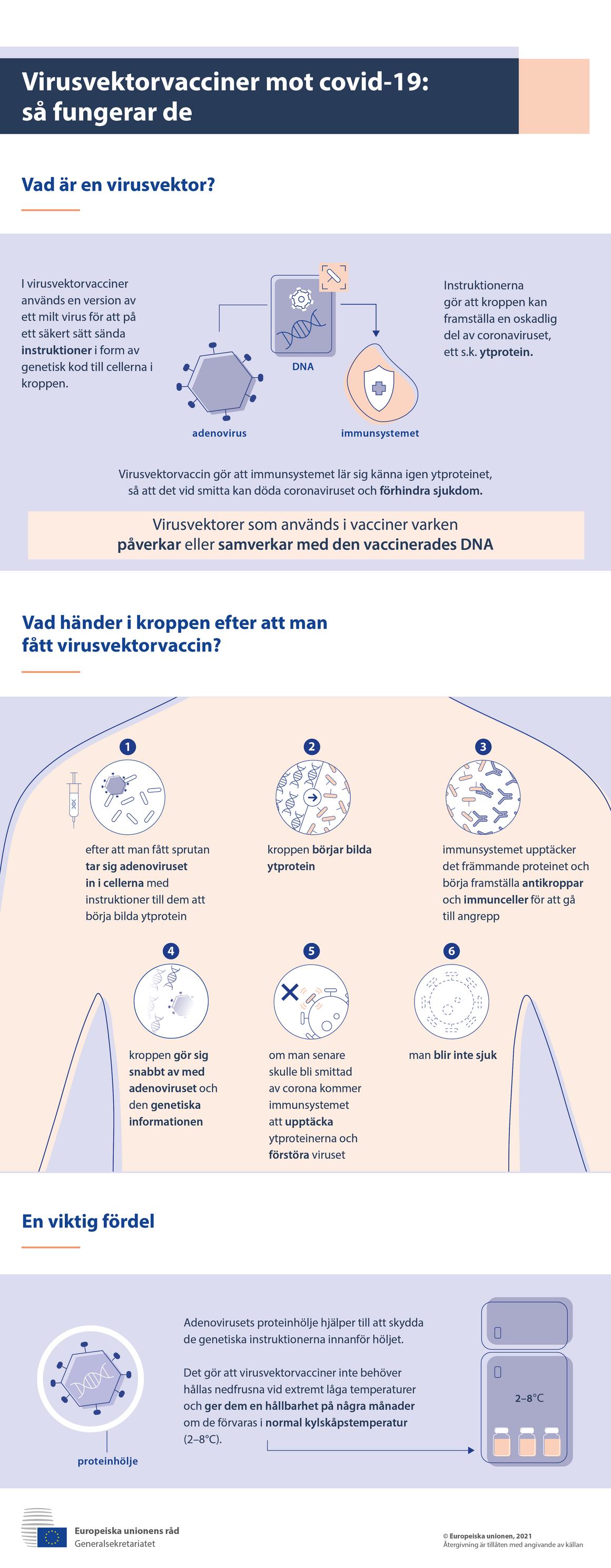 Infografik – Virusvektorvacciner mot covid-19: så fungerar de