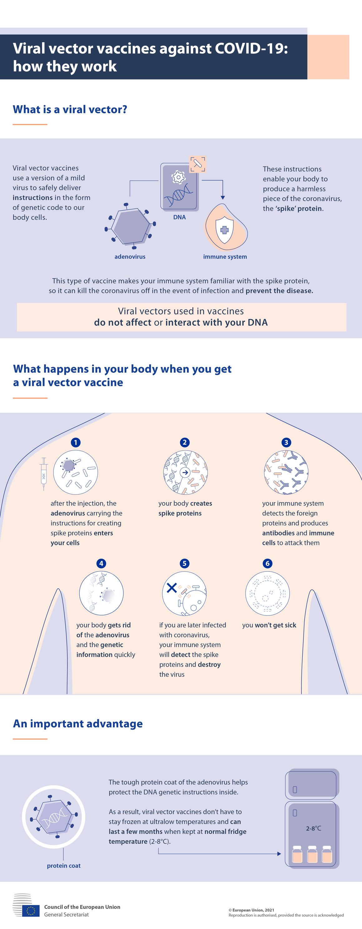 Infografikk – Viral vektor-vaksiner mot covid-19: hvordan de fungerer